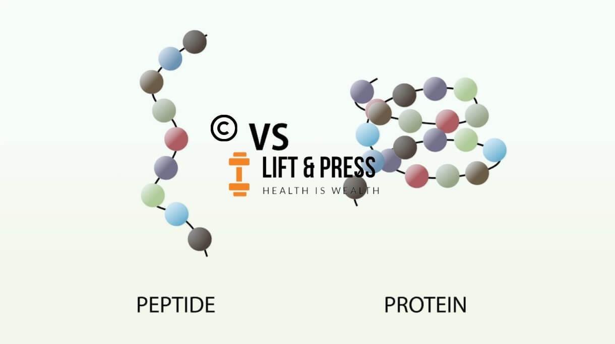 peptides molecular structure